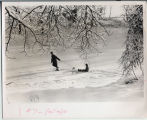 Winter scene, sledding