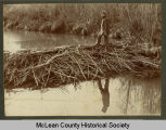 Beaver dam on Turtle Creek, McLean County, N.D.