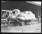 Loading Flax on wagon, Russia