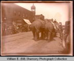 Elephants in Circus parade, Williston, N.D.
