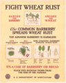 Fight wheat rust poster