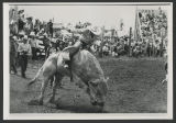Bull riding at rodeo, Mandan, N.D.