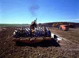 Sheep's foot roller at work on North Dakota road project