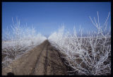 Frosted border, Southam Farm, Mohall, N.D.