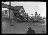 Woman seated on cow pulling buggy, Fort Berthold Indian Reservation, N.D.