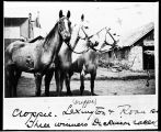 Croppie, Lexington, and Roan three winners of horse races, Dickinson, N.D.