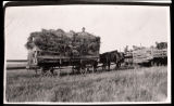 Harvested wheat, Burke County, N.D.