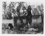 Marilyn, Margaret and Louise Aandahl standing by wire cage housing chicks on Aandahl farm,...
