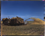 Threshing, Henry Langer, Casselton, N.D.
