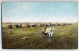 Harvesting scene, Fargo, N.D. color postcard