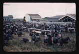 Turkeys on Nick Schmidt farm, Wyndmere, N.D.
