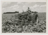 Cultivating a Sugar Beet Field near Grafton